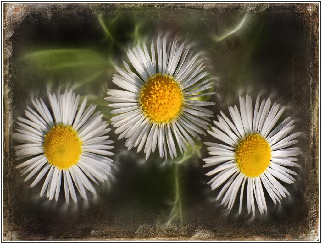 flowers-n-18